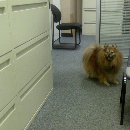 KOKO in OFFICE2